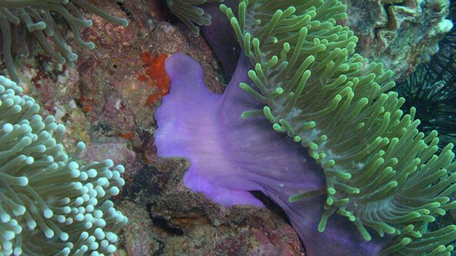 Great Barrier Reef by Robin Hook
