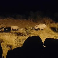 Black rhinos at watering hole in Etosha National Park
