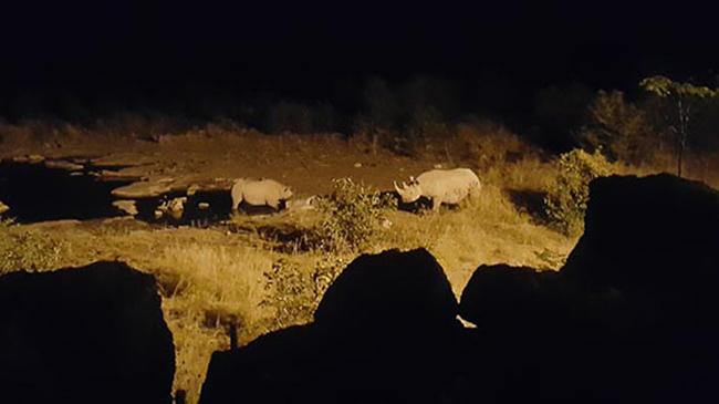 Black rhinos at watering hole in Etosha National Park