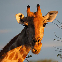 Namibia is latest adventure for Field Biology