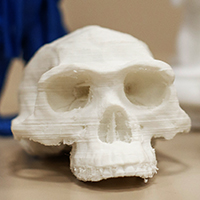 Neanderthal skull reproduction from 3-D printer